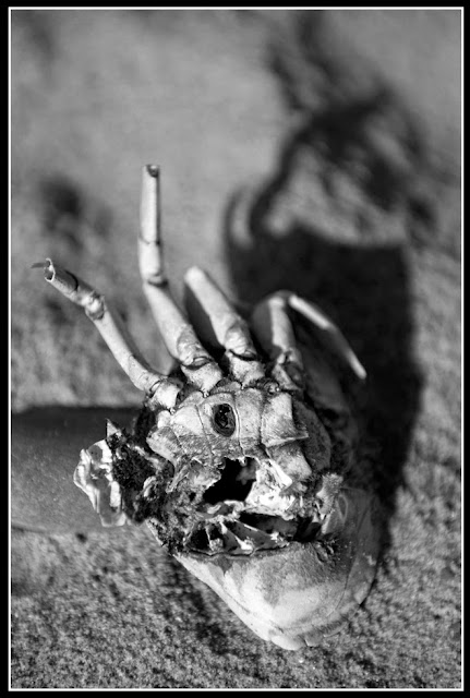 Dead; Death; Crab; Future Fossils; Decay; Skeletonal