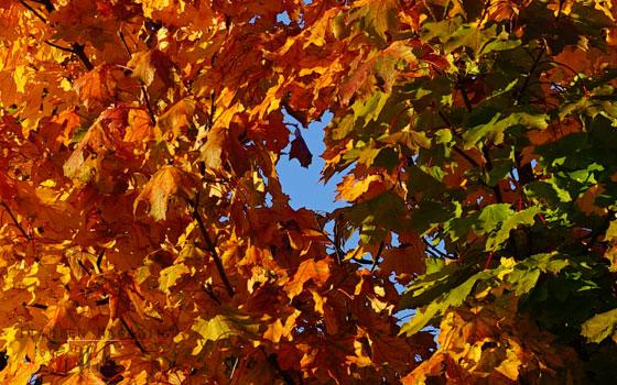 Warme Herbstfarben mit gelb und Rottönen
