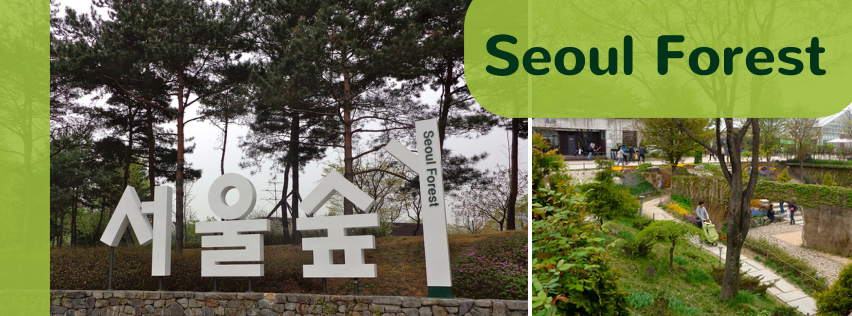Seoul Forest via Rebe With a Clause