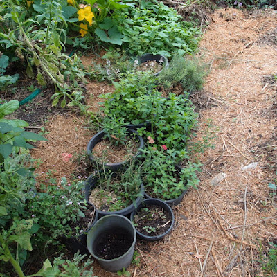 eight acres: using herbs - Rosemary and Thyme