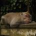 Conduire à Bali : les 10 commandements