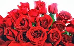 Gambar Berbagai Macam Bunga Cantik
