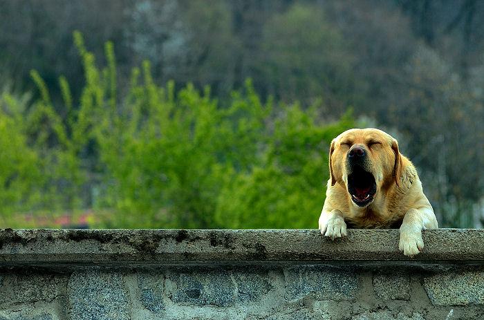Giải mã giấc mơ thấy Chó & nằm ngủ mơ thấy Chó