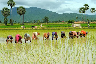 farming helps farmers in generating income
