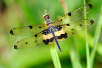 Dragon Fly Photos and Pictures 27
