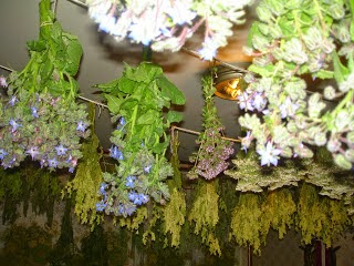 2014.g. sezona augu pasaulē
