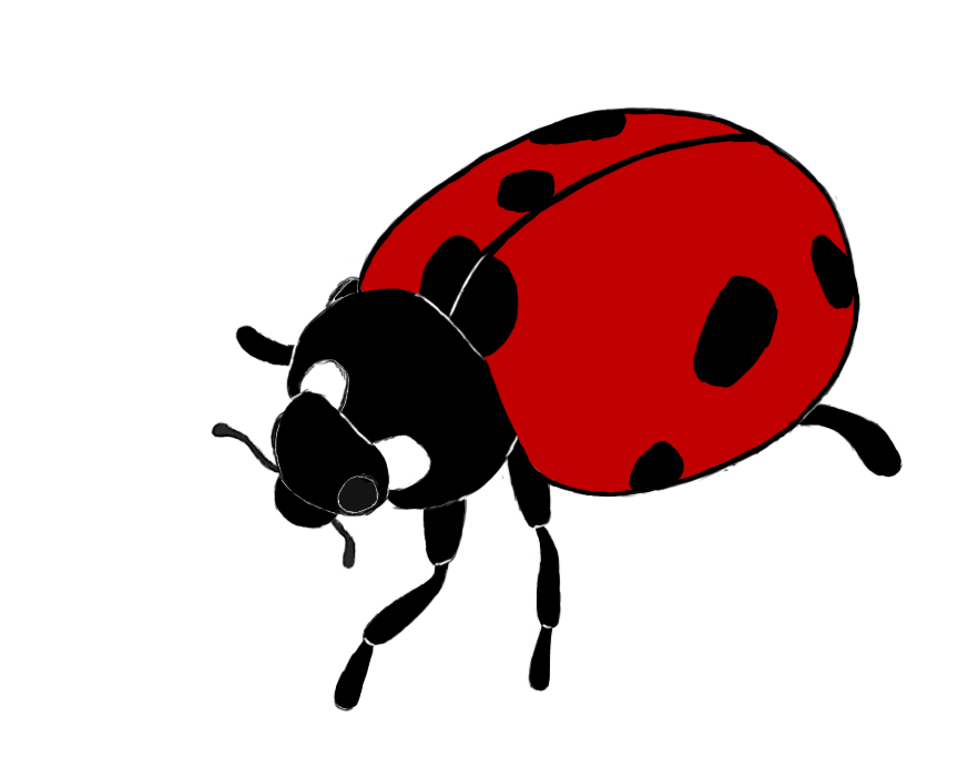 Realistic ladybug drawing - photo#3