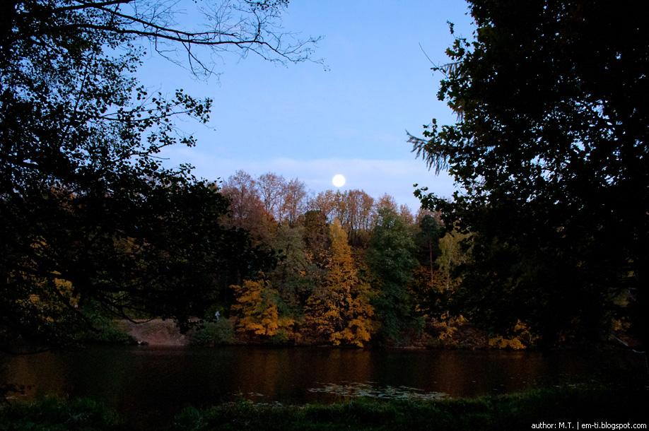 Вечерний лес. Evening forest.
