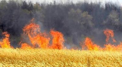 Incendie : dix hectares de terres agricoles partis en fumée