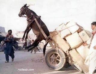 Gambar Lucu yang ini lucu banget kudanya keberatan beban jadinya kaya