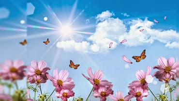 #9 Lovely Flowers Wallpaper Desktop Background Full Screen