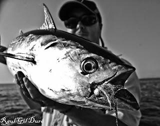 La pesca a mosca de pequeños túnidos en el mediterraneo
