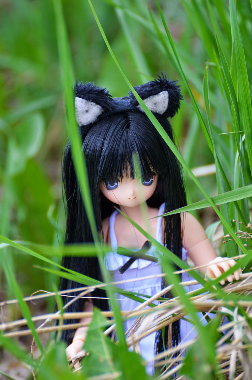 aika cat azone doll
