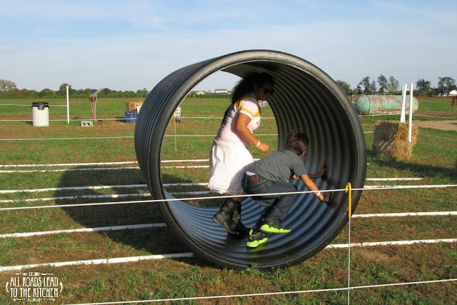 Human Hamster Wheel at the Shipshewana Corn Maze