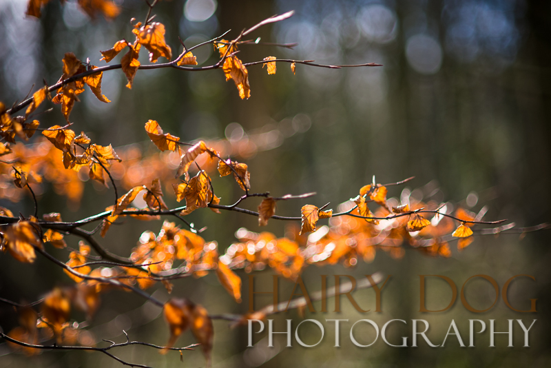 Backlit leaves during a dog photoshoot