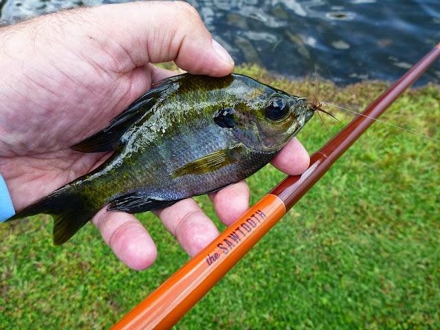 Breaking in the tenkara rod co sawtooth rod for Fly fishing jobs