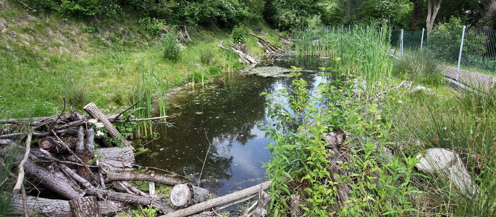 Dein nachbarlohbach jahresbericht 2012 for Wassertiere im teich