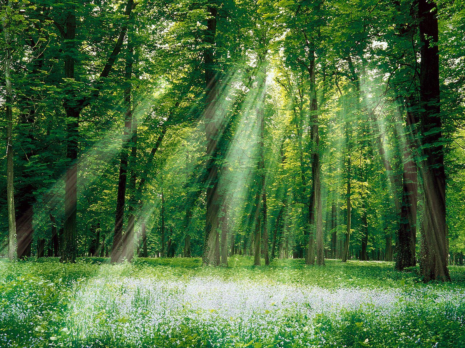 http://4.bp.blogspot.com/-sg4_Ai27WQg/T1dfQm0XdkI/AAAAAAAAB74/8AgDOpZ-qEE/s1600/Forest+%252840%2529.jpg
