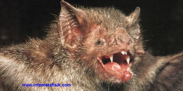 satu dari 9 Makhluk Gaib Paling Populer dalam Mitos Dunia Barat