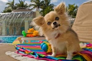 cachorro de férias