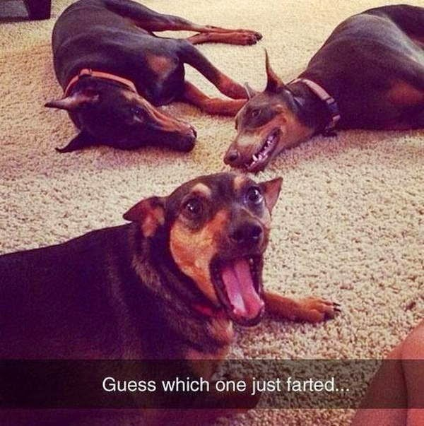 Cute dogs - part 28 (50 pics), dog photos, funny dogs