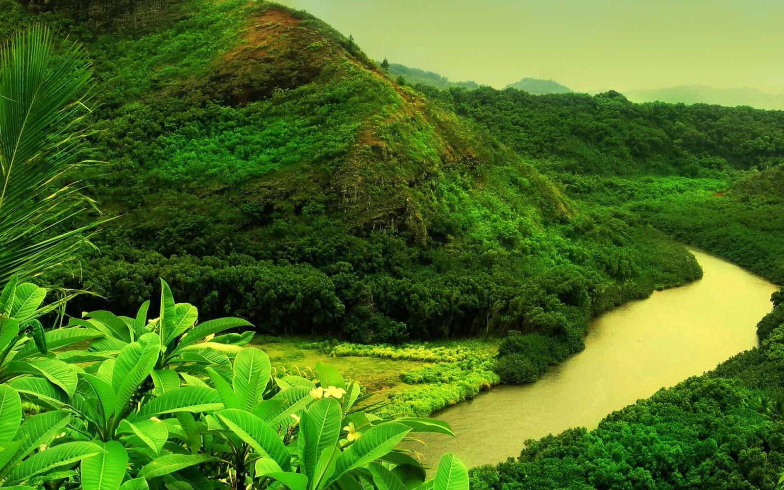 greenery wallpapers wallpapers for desktop free