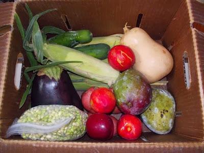 veggiebin produce delivery service