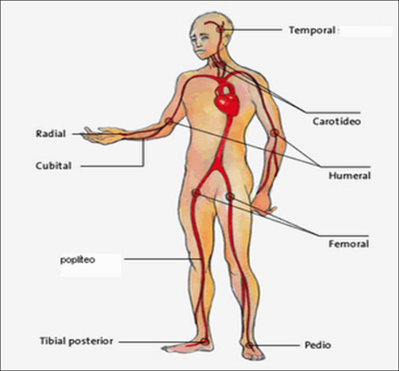 Enfermería Básica UCV : Abdomen y Miembros Superiores e Inferiores
