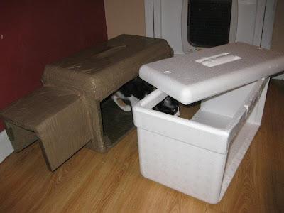 El blog de futur animal febrero 2012 - Casa gatos exterior ...