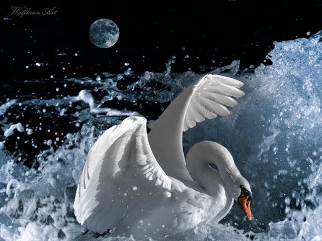 красивый фото лебедей