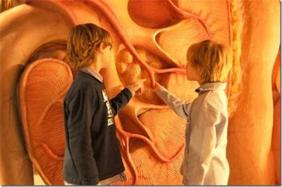 اغرب متحف , متحف لتفاصيل جسم الانسان 8