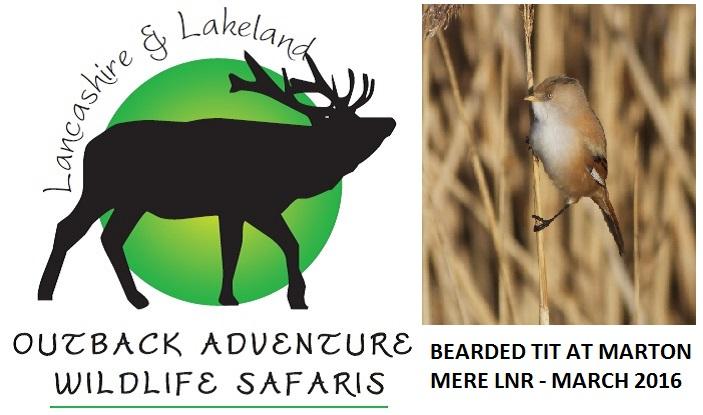 Lancashire and Lakeland Outback Adventure Wildlife Safaris