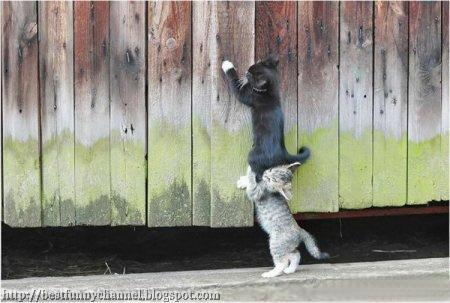 Two funny kitten.