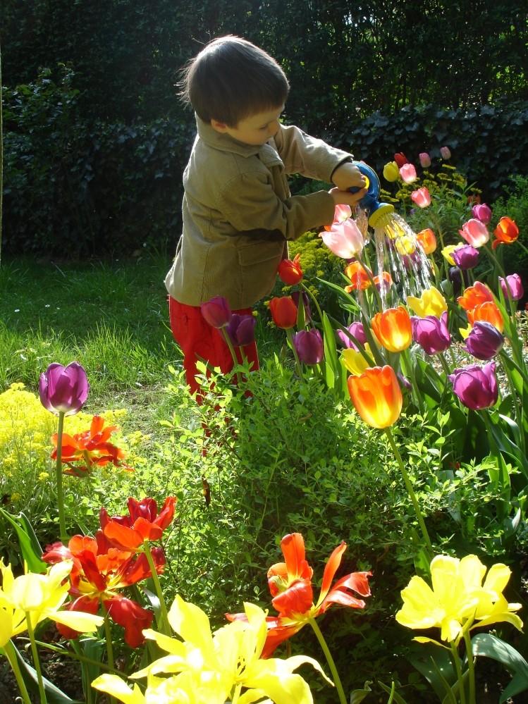 Reflexão Jardim regado