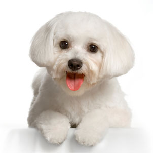 cute dog animal