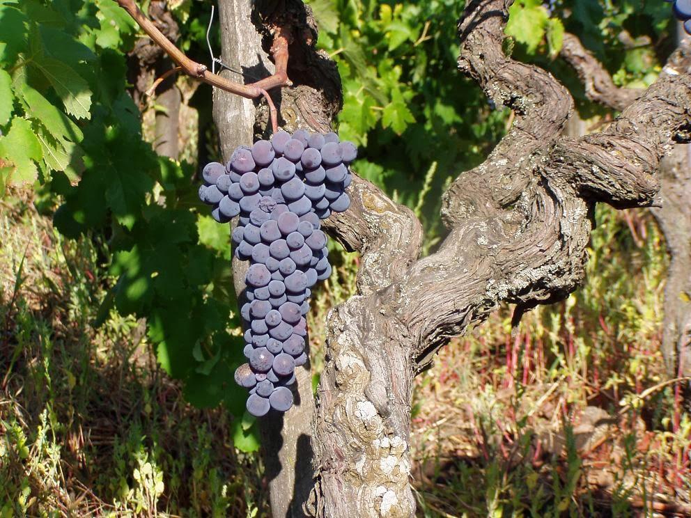 Divinando catania ti ha riempito il calice wine tour for Piccole planimetrie con cantine