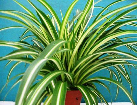 La mera verda plantas que purifican el aire for Plantas de interior precios