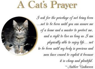 Paw Town Cats Sanctuary