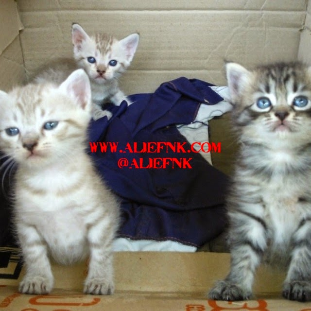 Bella's Kids - Eleanor, Kimmy, Oscar [image by @tyaslestarie]