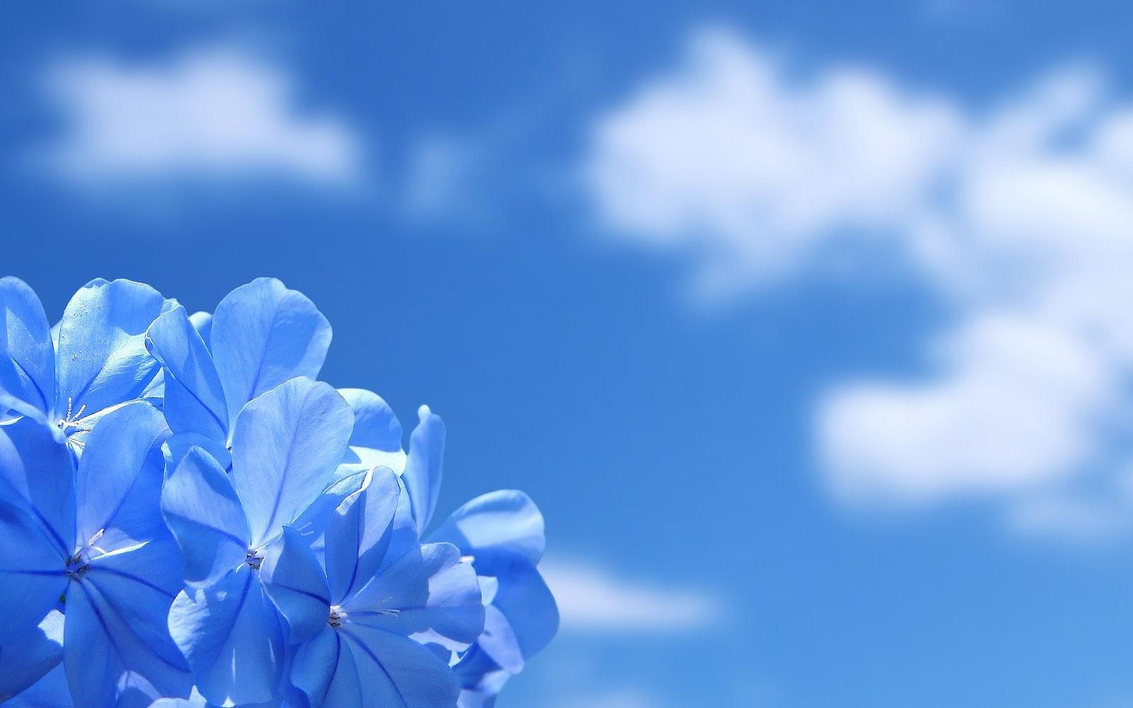 http://4.bp.blogspot.com/-siY3bnUza9g/T5Iwys9xwzI/AAAAAAAAA_A/Ii-OKWzCokk/s1600/Best-top-desktop-flowers-wallpapers-hd-flowers-wallpaper-picture-image-background-10.jpg