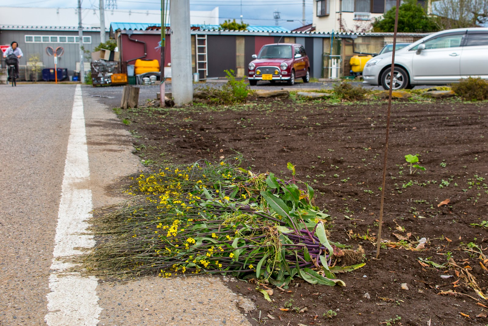 Pulled up plants on the roadside, Oizumi, Gunma Prefecture.