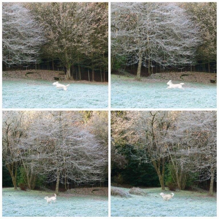 Weihnachen eisig gefroren hüpfen Wiese Wald Bayern