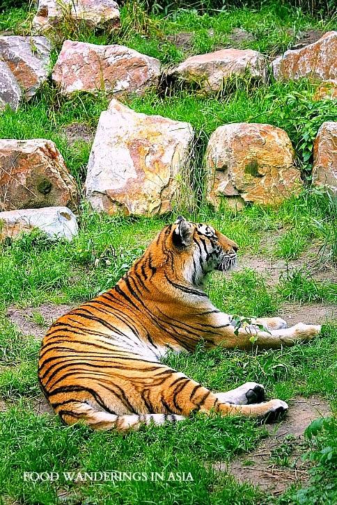 Dierenpark Zoo