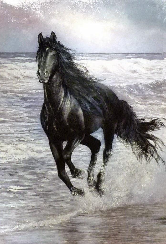 caballo-negro-corriendo-en-el-agua