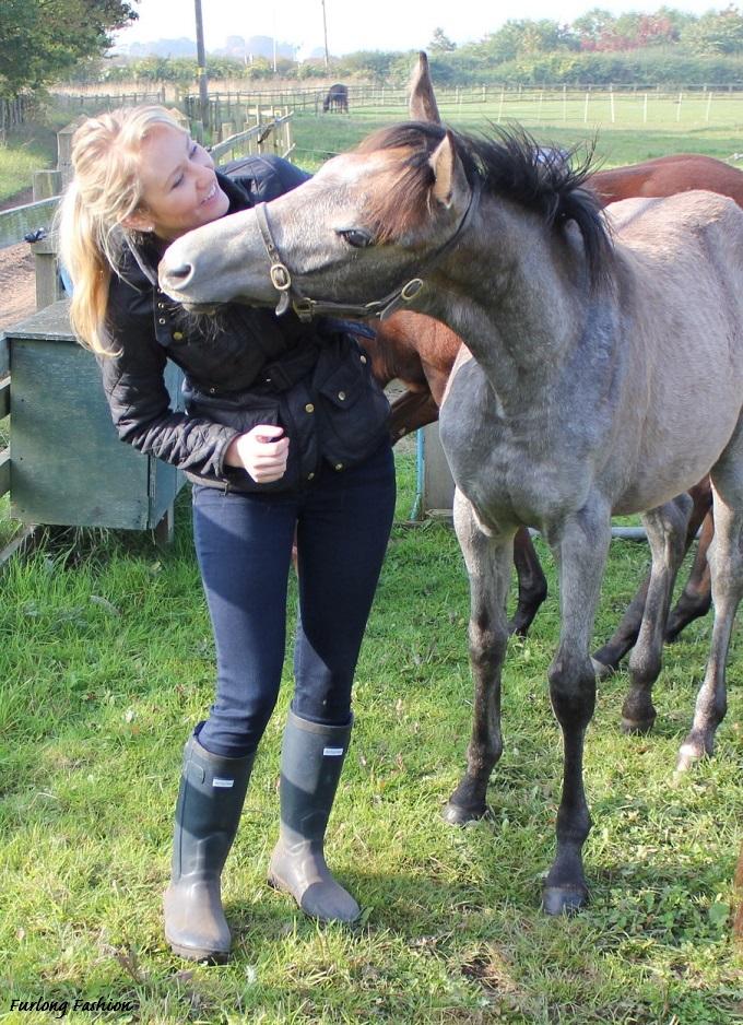racehorse foal