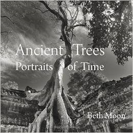 Ancient Trees Book