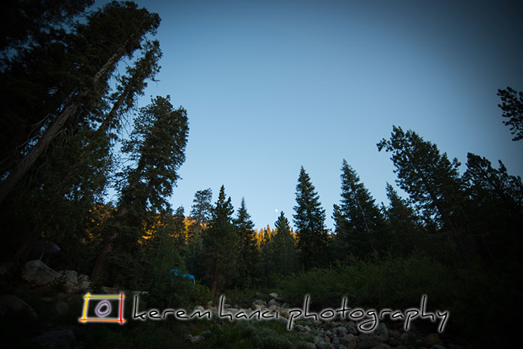The rising moon is tiny in the middle of the gorgeously tall sequoias and redwoods, captured from the river bed.