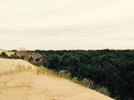 La reserva de Cariló desde el límite sur