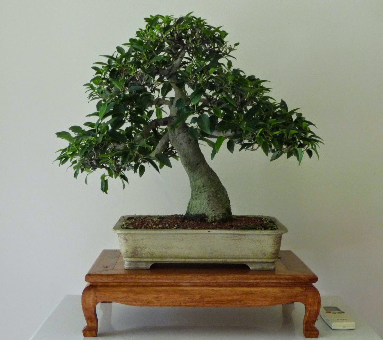 Bonsai Amp Pottery March 2015