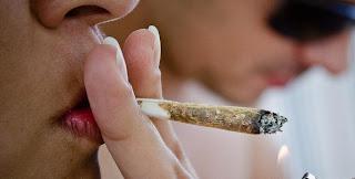 Pesquisa mostra que maconha é a droga ilícita mais usada no mundo
